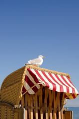 Seagull on a beach chair
