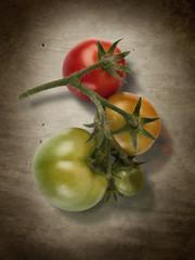 Tomaten in drei Reifestufen
