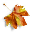 canvas print picture - tree leaf