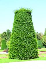 Gartenpflanze in Wien