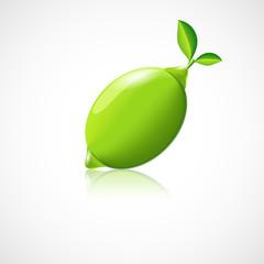 Lime fruit icon