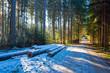 canvas print picture - Waldlichtung