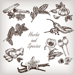 Set Kitchen herbs and spices. Hand drawn vector illustration.
