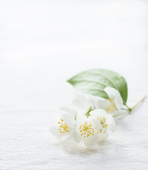 Jasmine flowers over light background