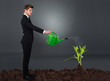 Side View Of Businessman Watering Plant