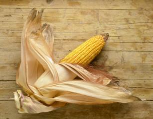 Zea mays Maïs Mais Kukurydza zwyczajna Mısır bitki