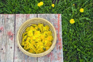 fresh summer dandelion flowers in basket on table
