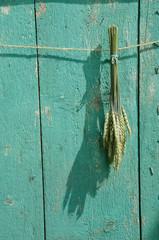 wheat bunch on green wooden farm barn wall