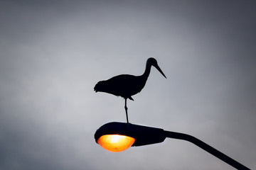Silhouette of a stork on the lantern