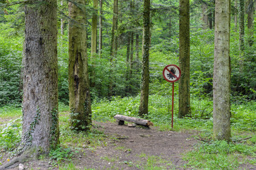 No Fires allowed in forest