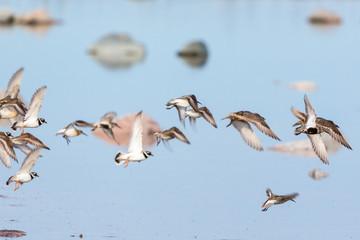 Flock of wading birds