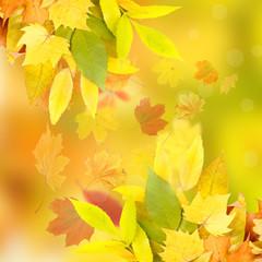 Vivid autumn leaves background