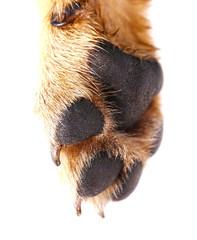 Dog's paws closeup