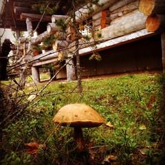 mushroom-eye view of lapland