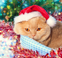 Cat wearing Santa hat lying in a basket at Christmas background