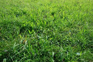 Gras und Wiese