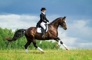 Woman riding a horse on the hill. Equestrian sport - dressage.