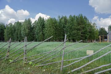 Arkhangelsk, Russia. Decorative wheat field, enclosed fence