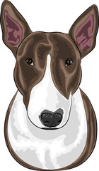 vector dog breed Bull Terrier