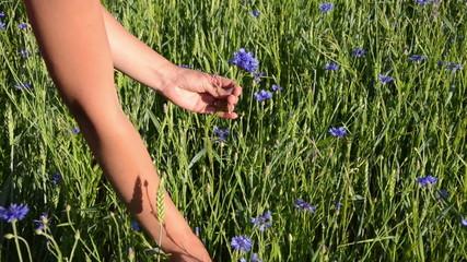 female arm gather cornflower long stems make them nice bouquet