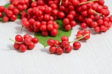 Schisandra chinensis Fruit and Berries