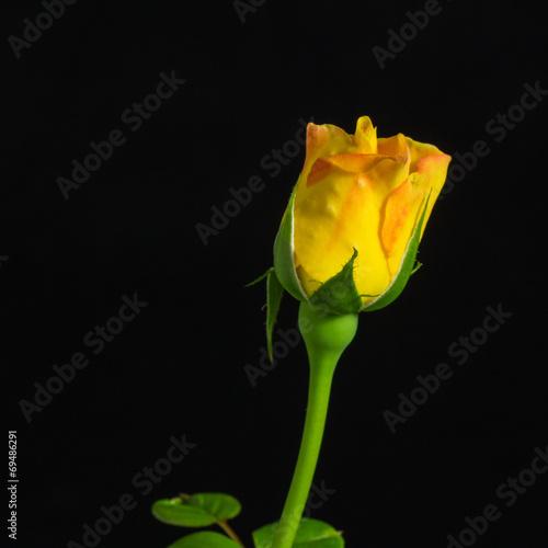 canvas print picture Fiore giallo