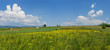 Panorama of romanian farm field with flowers