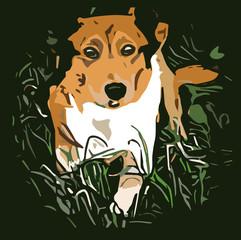Collie dog in grass