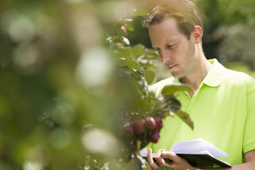 Horticulturist checking his appletrees on his farm