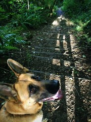dog on walk in forest looking at camera