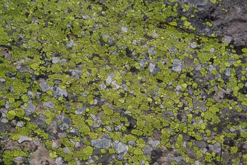 Roche et lichen
