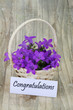 Congratulations card with campanula flower basket