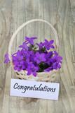 Congratulations card with campanula flower basket