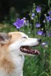 目を閉じた犬の横顔