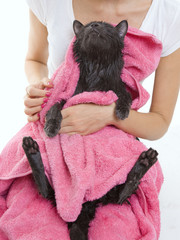 Cute gray soggy cat after a bathCute black soggy cat after a bat