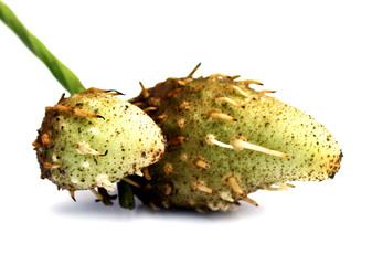 Green air potatoes