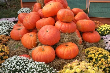 Stack of Pumpkins and chrysanthemum (Dendranthema), Halloween