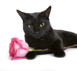 Black Cute pet (cat) with rose on white background