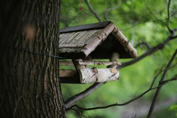 Kleines Vogelhäuschen auf Baum
