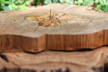 beeindruckende Naturgewalten - Baum