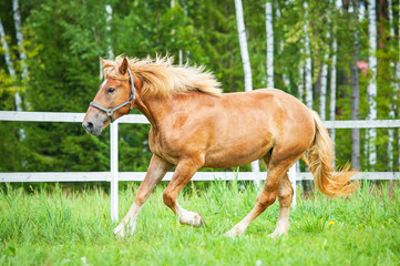 Beautiful horse running in the paddock