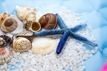 Blue star fish and shells. Concept of Summer Holiday.