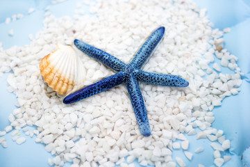 Blue star fish and shell. Concept of Summer Holiday.