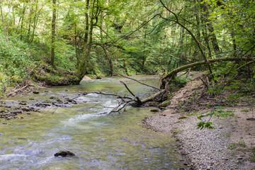 Wald Bach