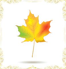 Bright maple leaf