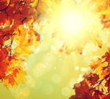 Abstract autumnal background with colorful leaves and sun