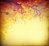 Abstract autumnal background with colorful leaves