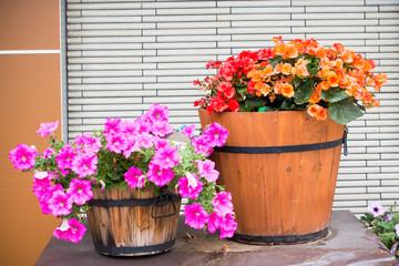 Petunia flower in wooden pot