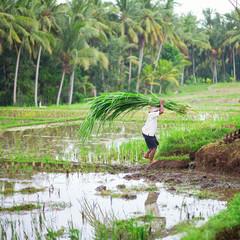 Man working on rice field near Ubud
