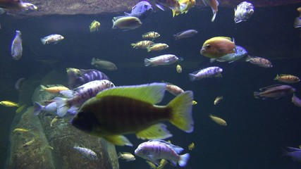 Fish, Sea Life, Aquariums, Animals, Nature